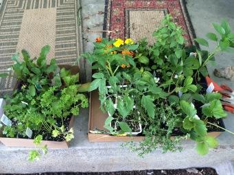 Fruit and veggie starts!