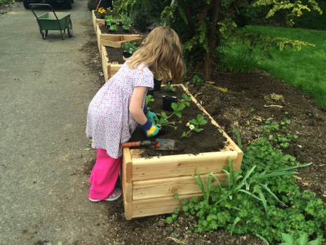 Amelia was wild to plant the strawberries.