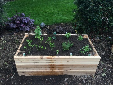 clockwise from back left: oregano, tarragon, basil, cilantro, cilantro, thyme, parsley x6