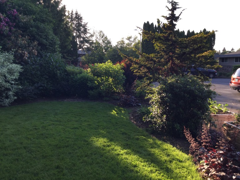 One of our three small oases of grass.