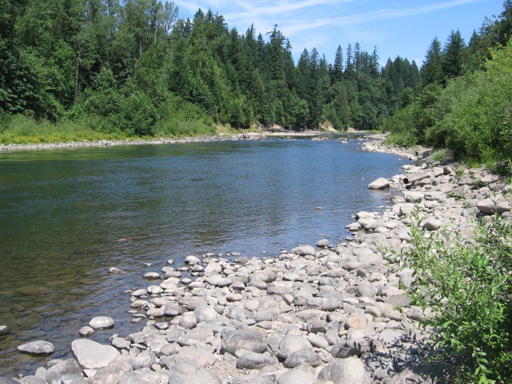 The Clackamas River flowing through Milo McIver state park